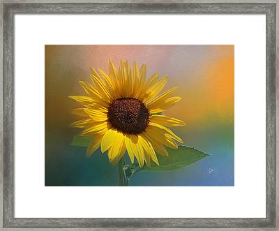 Sunflower Summer Framed Print by TK Goforth