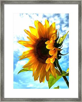 Sunflower - Sun Shine On Framed Print