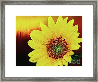 Sunflower Sunset By Kaye Menner Framed Print by Kaye Menner