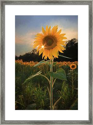 Sunflower Sunset Framed Print by Lori Deiter