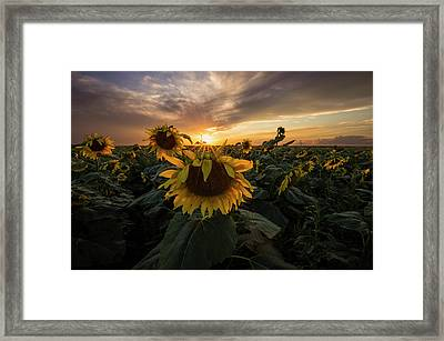 Framed Print featuring the photograph Sunflower Sunstar  by Aaron J Groen