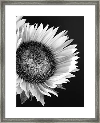 Sunflower Supermodel Framed Print