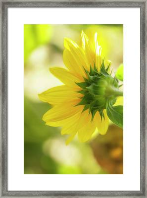 Sunflower Sweet Framed Print