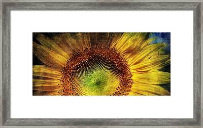 Sunflower Framed Print by Vittorio Chiampan