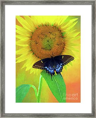 Sunflower With Company Framed Print