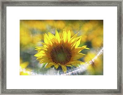 Sunflower With Lens Flare Framed Print
