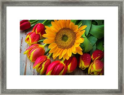 Sunflower With Red And Yellow Tulips Framed Print