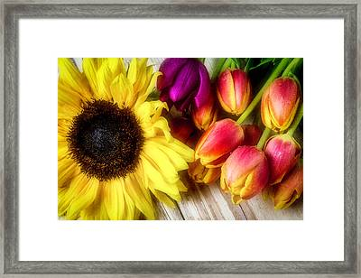 Sunflower With Tulips Framed Print by Garry Gay