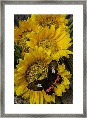 Sunflower With Wonderful Butterfly Framed Print by Garry Gay