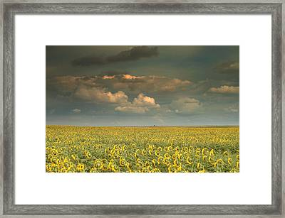 Sunflower World.. Framed Print