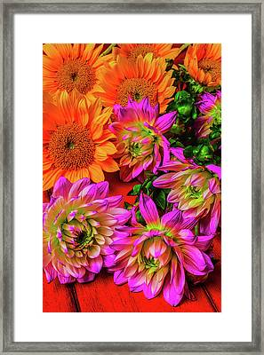 Sunflowers And Dahlias Framed Print by Garry Gay