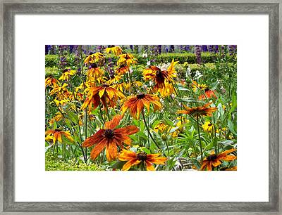 Sunflowers And Friends Framed Print by Jean Booth