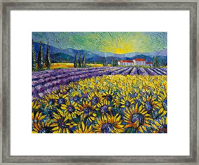 Sunflowers And Lavender Field - The Colors Of Provence Modern Impressionist Palette Knife Painting Framed Print