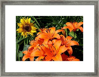 Sunflowers And Lillies Framed Print by Lois Lepisto
