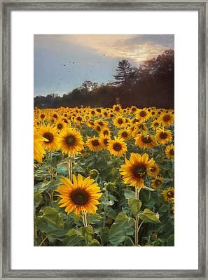 Sunflowers At Sunset Framed Print by Lori Deiter
