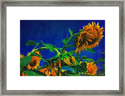 Sunflowers Awakening Framed Print
