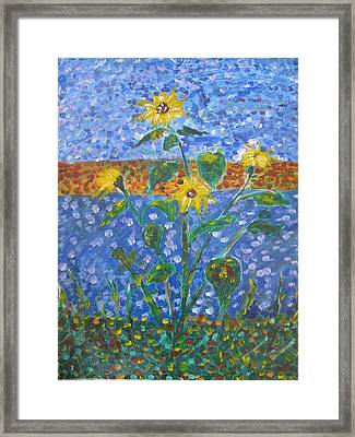 Sunflowers Bursting Framed Print by Dennis Poyant