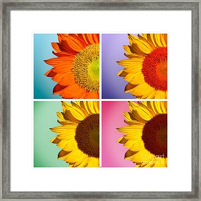 Sunflowers Collage Framed Print by Mark Ashkenazi