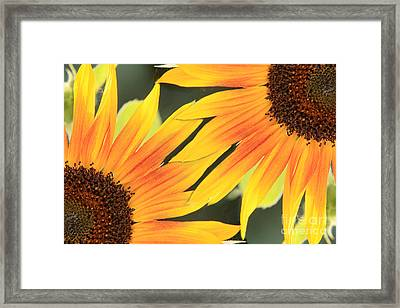 Sunflowers Corners Framed Print by James BO  Insogna