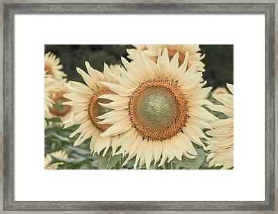 Sunflowers Detail Framed Print
