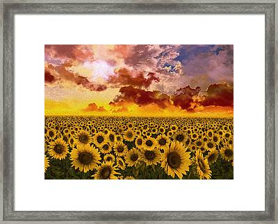 Sunflowers Field 1 Framed Print