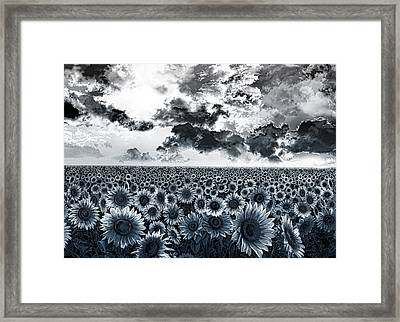 Sunflowers Filed 2 Framed Print by Bekim Art