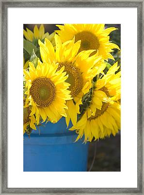 Sunflowers For Sale Framed Print by Elvira Butler