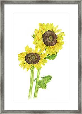 Sunflowers Framed Print by Georgea Hugus