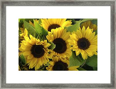 Sunflowers Framed Print by Henri Irizarri