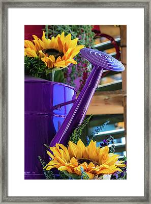 Complementary Sunflowers Framed Print