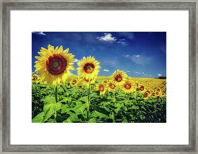Sunflowers In A Row -  Pope Farm Conservancy  Framed Print by Jennifer Rondinelli Reilly - Fine Art Photography
