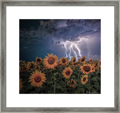 Sunflowers In Adversity Framed Print by Brent Shavnore