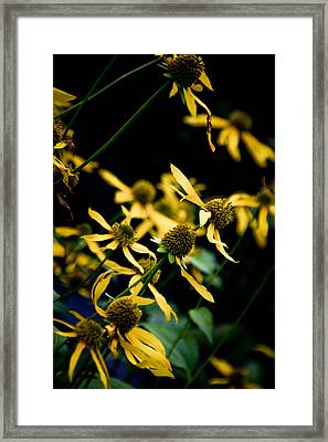 Sunflowers In North Carolina Framed Print by Jonathan Hansen