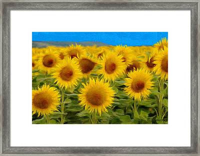 Sunflowers In The Field Framed Print
