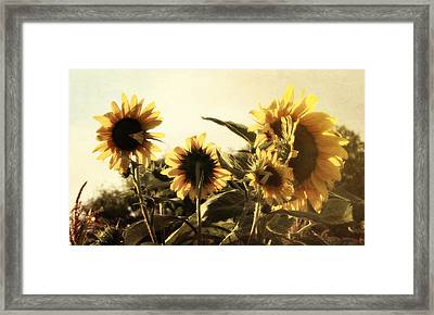 Framed Print featuring the photograph Sunflowers In Tone by Glenn McCarthy Art and Photography