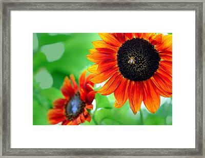 Sunflowers  Framed Print by Mark Ashkenazi