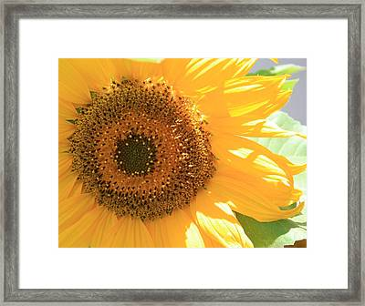 Sunflowers  Framed Print by Marna Edwards Flavell