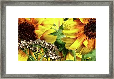 Sunflowers Framed Print by Mikki Cucuzzo