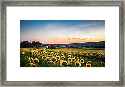 Framed Print featuring the photograph Sunflowers, Moon And Stars by Eduard Moldoveanu