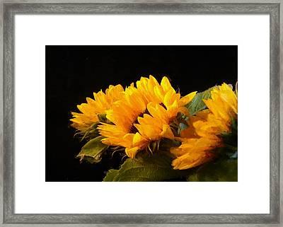 Sunflowers On A Black Background Framed Print