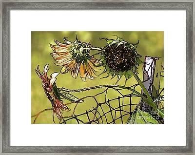 Sunflowers On A Fence Framed Print by Susan Isakson