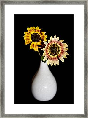 Sunflowers On Black Background And In White Vase Framed Print