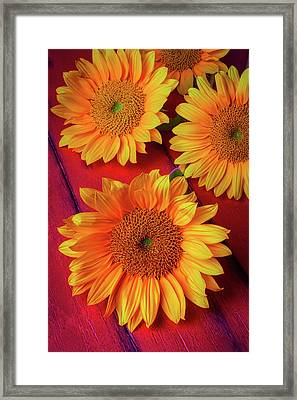Sunflowers On Red Boards Framed Print by Garry Gay