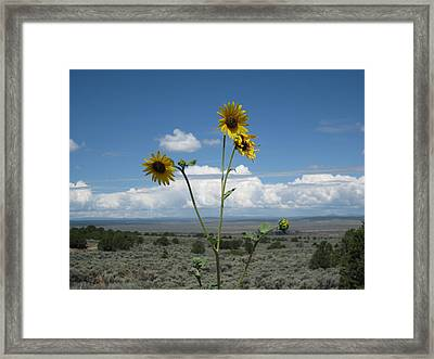 Sunflowers On The Gorge Framed Print