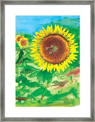 Sunflowers Framed Print by Ray Cole