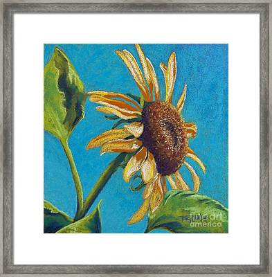 Sunflower's Shine Framed Print by Tracy L Teeter