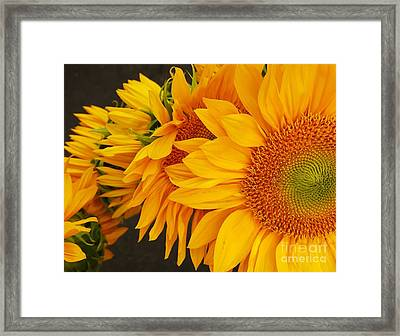 Sunflowers Train Framed Print