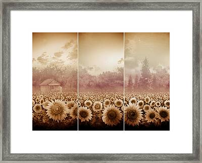 Sunflowers Triptych 3 Framed Print by Bekim Art
