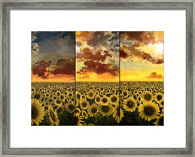 Sunflowers Triptych Framed Print by Bekim Art