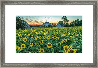 Sunflowers For Wishes  Framed Print